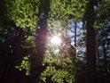Romanticky působící Slunce za bukovým listím, obklopené modříny.