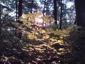 Ranní Slunce pod vrcholem hory Říp se prodírá mezi dospělými i mladými javory výše. Takový pohled zajisté praotec Čech spatřit nemohl.