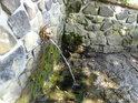 Královský pramen bočním pohledem. I přes nekrálovské prostředí, je voda z něj velice dobrá. Však tu Přemysl Oráč napájel své voly.