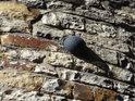 Dělová koule, zazděná do rotundy svatého Martina na Vyšehradě sem byla zazděn po pruském ostřelování v roce 1757.